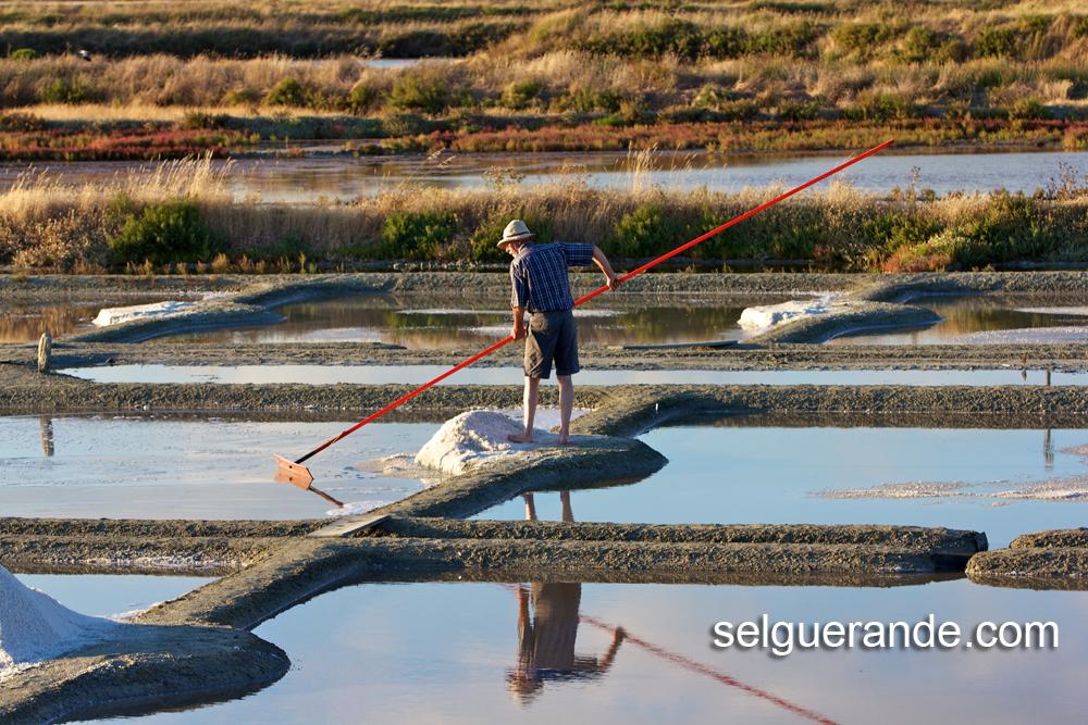 Le paludier récolte le gros sel de Guérande avec son outils, le Las